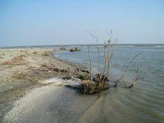 Dunarea si Marea Neagra