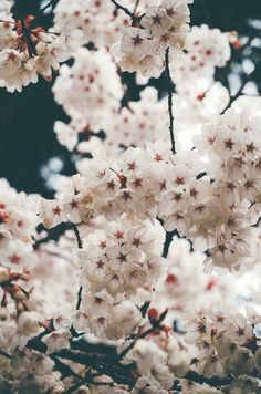 Antiguo flor tono