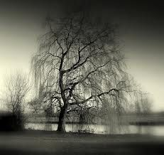 1000+ images about Willow (and other) Trees on Pinterest ...Weeping Willow Black And White Tattoo