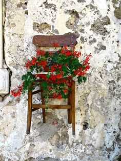 Here is yet another chair planter idea. This one is a Hanging Chair with Flowers, Sicily, Italy Unique Gardens, Beautiful Gardens, Beautiful Flowers, Garden Chairs, Garden Planters, Jardin Decor, Chair Planter, Red Geraniums, Old Chairs