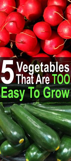 In this video, Self Sufficient Me talks about 5 vegetables that are almost too easy to grow. Even if you don't take good care of your garden, you might still get a lot of food from these crops. And if you do try, you're almost guaranteed to have a huge harvest.