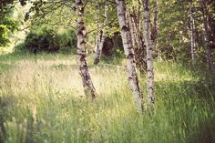 Schoneberger Sudgelande Park | Odious