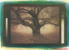 Jalo Porkkala: In Times Past, gum bichromate print.  This is the finished print, with all six layers printed.