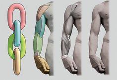 anatomy_02.jpg (1000×684)