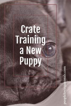 Crate Training a New Puppy Puppy crate training, how to crate train a puppy, crate training tips, Puppy Training