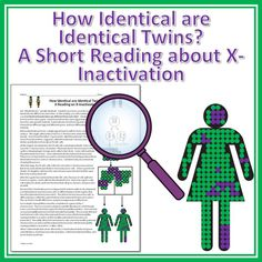 A short reading about X-inactivation and how identical twins are not exactly identical.  This will help answer every biology students questions about twins and this lesson pushes students past their basic understanding of genetics!