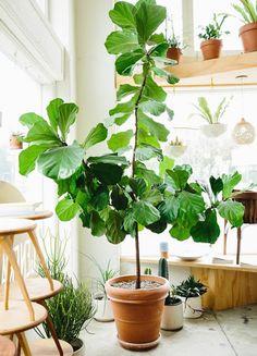 Indoor plants size XL