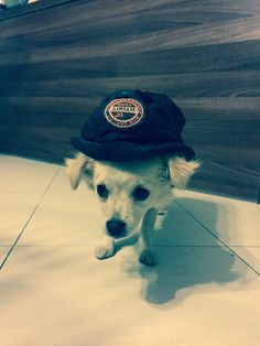 DoggyHoodie