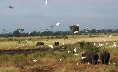 Beautiful photo of Rhino enjoying the lush swamp in the sanctuary - thanks to Jos Gaki for the photo.