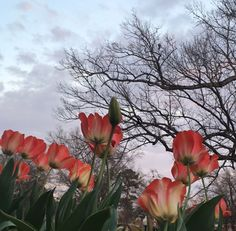 beauty - is the sky and my favourite flowers