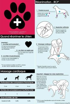 Gestes de premiers secours RPC chien Pug Love, I Love Dogs, All Dogs, Happy Animals, Animals And Pets, Cute Animals, Comment Éduquer Son Chien, Bull Terrier, Schnauzer