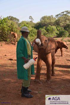 Da Elefanten keine Kuhmilch als Ersatznahrung vertragen, war es lange Zeit unmöglich, verwaiste Jungtiere am Leben zu erhalten. Daphne Sheldrick entwickelte eine spezielle Milchmischung mit pflanzlichem Fett, die es von da an ermöglichte auch die kleinsten Elefanten großzuziehen. Fett, Elephant, Aga, Animals, Wildlife Conservation, Baby Cubs, Elephants, Life, Guys