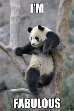 Hope Everyone is Enjoying a Fabulous Monday! Panda On! Dear Friends! <3 panda-on.com