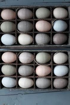 eggies//au naturale color pallette