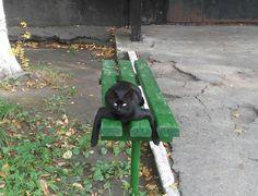Autumn Cat on green bench