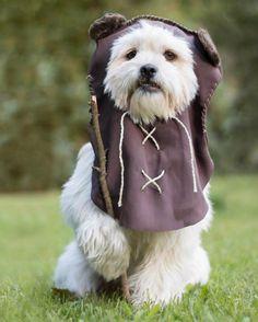 Por que não fantasiar o cachorro para o Halloween? Ewok, Best Dog Costumes, Circle Of Life, Princess Leia, Just For Laughs, Halloween, Trick Or Treat, Cute Pictures, Kittens