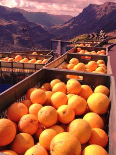 Where oranges come from! Beach Cafe, Island Food, Canario, Allrecipes, Tapas, Food And Drink, Journey, Restaurant, Orange