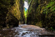 #170 Oneanta gorge, Oregon, USA