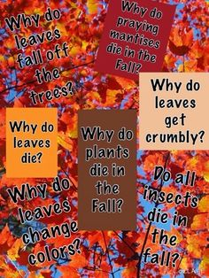 Inquiring Minds: Mrs. Myers' Kindergarten: The Autumn Season: Exploring Trees and Leaves and ...