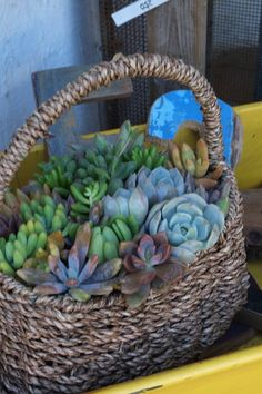 Succulent basket Succulents In Containers, Container Plants, Cacti And Succulents, Planting Succulents, Container Gardening, Terrariums, Succulent Terrarium, Little Gardens, Small Gardens