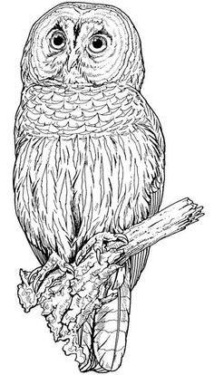 Backyard Animals and Nature Coloring Books Free Coloring Pages Owl Coloring Pages, Coloring Sheets, Coloring Books, Mandala Coloring, Printable Coloring Pages, Art Zen, Wood Burning Patterns, Owl Art, Colorful Pictures
