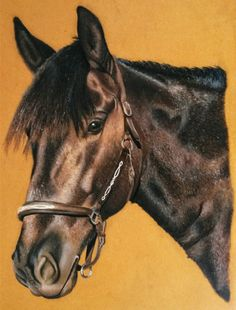 Mein Pferd Bailey #Pastellstifte
