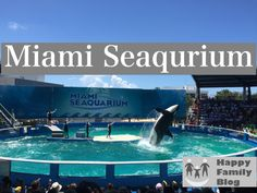 Tips for a fun day at Miami Seaqurium by Happy Family Blog #Dolphins #Killer Whale #Miami