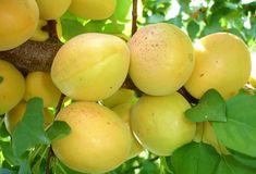 Teama de pesticide este, cu siguranță, întemeiată. La fel este și dorința ca fructele produse în livada proprie să fie cât mai pure cu putință.