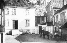 Et vanlig syn i det gamle Bergen. Her har kanskje melke/grisemannen tatt seg en tur inn til madammen i Skuteviken, for å få seg en kaffekopp, mens hesten koser seg med havresekken. (Foto: Ralph Wilson).