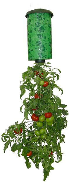 Topsy Turvy® Tomato Planter  Works in a simple yet ingenious way. As the sun warms the plant like a greenhouse, the root system explodes and thrives inside the planter.