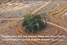 Deforestation will NOT sustain us!