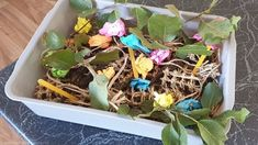 Timothy shows you how to make a quick, cheap and easy foraging tray that will keep your bird entertained for hours. Birds For Sale, All Birds, Cat Litter Tray, Budgies, Parrots, Easy Bird, Apple Roses, Lucky Bamboo, Parrot Toys