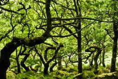 Trees! So fairy tale looking.