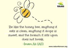 Hazrat Ali Quotes: Be like the honey bee, anything it eats it eats is clean, anything it drops is sweet, and the branch it sits upon does not break. -Imam Ali (AS)