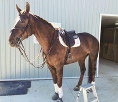 Writer. Equestrian. Dreamer. : Photo