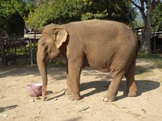 Check out my daughters blog about her trip to the sanctuary. It was so positive for all my children and they have avoided any other elephant trips or tourism throughout the rest of our Asia trip. #Beautiful #Nature #Entertainment #Animal #Style #Tattoos #Funny #DIY
