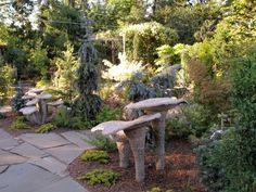 Remy  uploaded this image to 'Rock Garden Society/Jerry Kral'.  See the album on Photobucket.