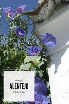 Wil je een bijzondere streek in Portugal ontdekken? Ga dan naar Alentejo. Bekijk alle tips.