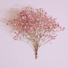 녹지않는 눈송이 위로 내린 봄 #꽃 #드라이플라워 #안개꽃 #색안개꽃 #분홍색 #봄 #일상 #flower #dry -