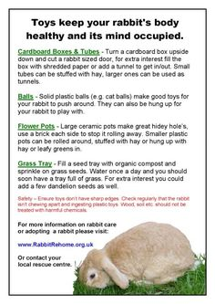 Rabbit toys that keep them healthy.