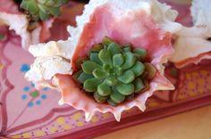 Seashells meet succulents :)