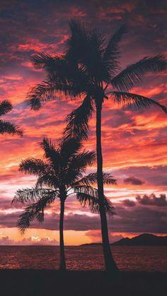 New Palm Tree Sunset Wallpaper Sun Ideas Tree Sunset Wallpaper, Beach Wallpaper, Summer Wallpaper, Nature Wallpaper, Wallpaper Backgrounds, Iphone Backgrounds, Paradise Wallpaper, Wallpaper Quotes, Landscape Wallpaper