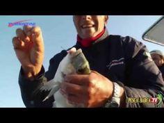 Marco Volpi spiega come pescare le orate (completo) - YouTube