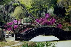 Absolutely stunning Avery Islands, Louisiana is home to Tabasco and Jungle Gardens and one of the most beautiful suprises in the entire state.