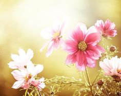 flower photography fine art nature photography by mylittlepixels
