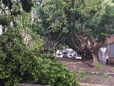 Trees and downed power lines after severe storms in Sydney Australia 4/21/15