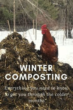 Winter Composting: Everything You Need to Know - J&R Pierce Family Farm Compost Container, Container Gardening, Gardening For Beginners, Gardening Tips, Flower Gardening, Red Wiggler Worms, Compost Tumbler, Garden Compost, Herbs Garden