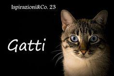 myrtilla'shouse: Gatti
