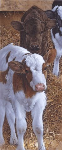 Calves being fed milk – Cow Art and More