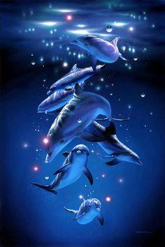 Dolphin forever by Daisy-and-Luigi-love on DeviantArt